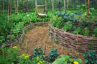 خضار يُمكنكم زراعتها في حديقة المنزل ولا تحتاج لعناية
