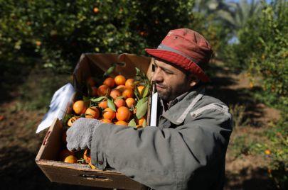الاحتلال يتراجع عن منع تصدير منتجات زراعية فلسطينية