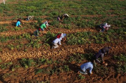 12 مليون دولار خسائر صادرات غزة الزراعية والسمكية