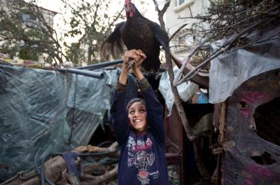 الدجاج والحبش أولًا في غزة.. واللحوم الحمراء للمناسبات