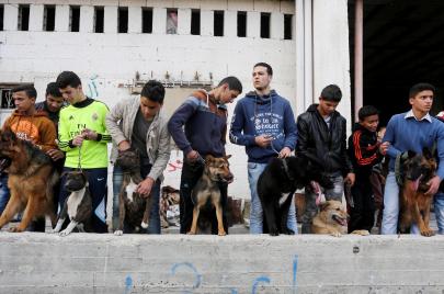 صور | كلابٌ مدللة في غزة