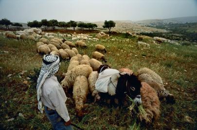 تغيّرات مناخية في فلسطين.. حقيقتها وتداعياتها