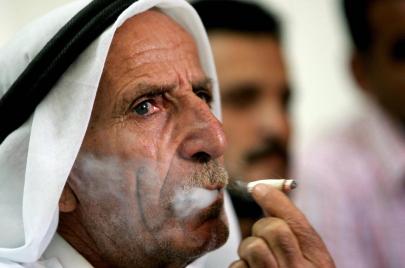 الضفة الغربية: زراعة الدخان