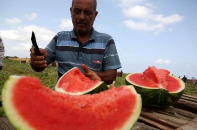 بطيخ فلسطين.. فاكهة وتسلية وأكثر