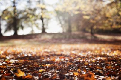 تباشير الخريف